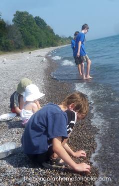 Beach Glass Hunting