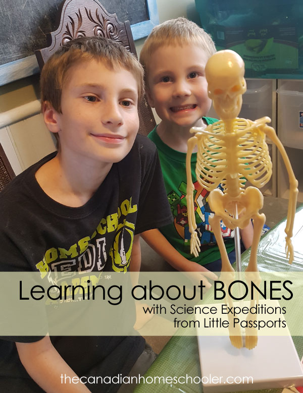 Two boys with a model skeleton learning about bones from a kit from Science Expeditions